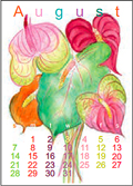 August -- Dame's Rocket